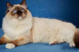 Reacciones dietéticas en gatos