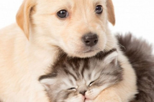 Cómo ayudar a las mascotas de las personas sin hogar