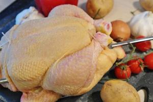 ¿Puede mi perro comer pollo crudo?