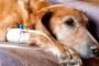 Cinco hechos sobre el cáncer de mascotas