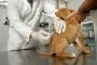 Como saber si tu perro ya necesita vacunarse