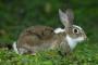 Pérdida de pelo en conejos