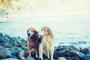 5 maneras de ayudar a su perro a vivir una vida más larga y más feliz