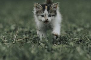 Degeneraciones e infiltraciones corneales en gatos