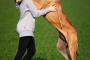 Top 10 mejores perros para abrazar