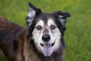 Tumor intestinal (leiomioma) en perros