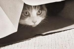 Cómo crear confianza en los gatos temerosos