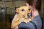 Animales en centros de evacuación y los riesgos potenciales