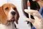 Cómo administrar insulina a un perro