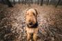 4 lecciones que cada mascota debe aprender a ayudar a darle a su perro una vida sana