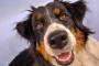 Enfermedades de la órbita del ojo en perros