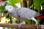 3 especies de aves grandes para tener de mascota