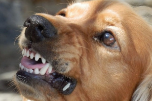 6 Cambios de comportamiento críticos a tener en cuenta en su perro.