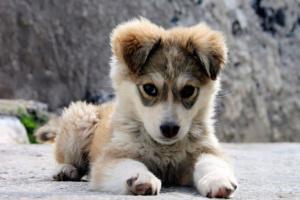 Remedios caseros para la tos de perrera en los perros