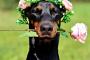 10 hechos que quizás no sepa sobre perros