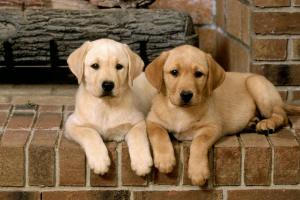Tos en perros: tipos, diagnóstico y tratamiento