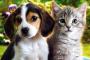 Cómo deshacerse de las pulgas de su casa, perros y gatos