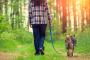 Cómo ayudar a un perro artrítico