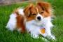 Anticuerpos que atacan los glóbulos sanguíneos a temperaturas más bajas en los perros