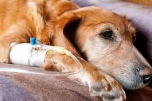 ¿Cuáles son los signos de cáncer en los perros?