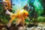 Enfermedad de burbujas de gas en peces