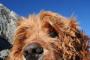 7 medios de tratamiento de la ansiedad del perro