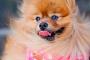 Top 10 mejores perros para principiantes