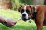 Si un perro tiene ataques ¿Qué debo hacer?