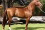Aneurisma en caballos