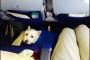 Viaje en avión con sus mascotas