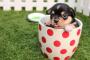 Consejos para asear a su nuevo cachorro