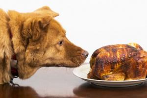 Lucha contra la obesidad en perros